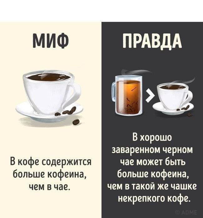 Мифы о кофе: 10 самых популярных заблуждений о любимом напитке | factinteres