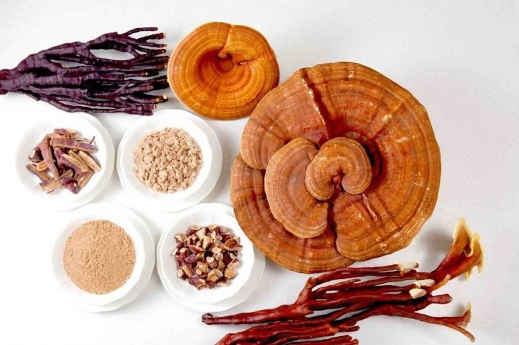 Гриб рейши: лечебные свойства и противопоказания, как заваривать гриб рейши: лечебные свойства и противопоказания, как заваривать