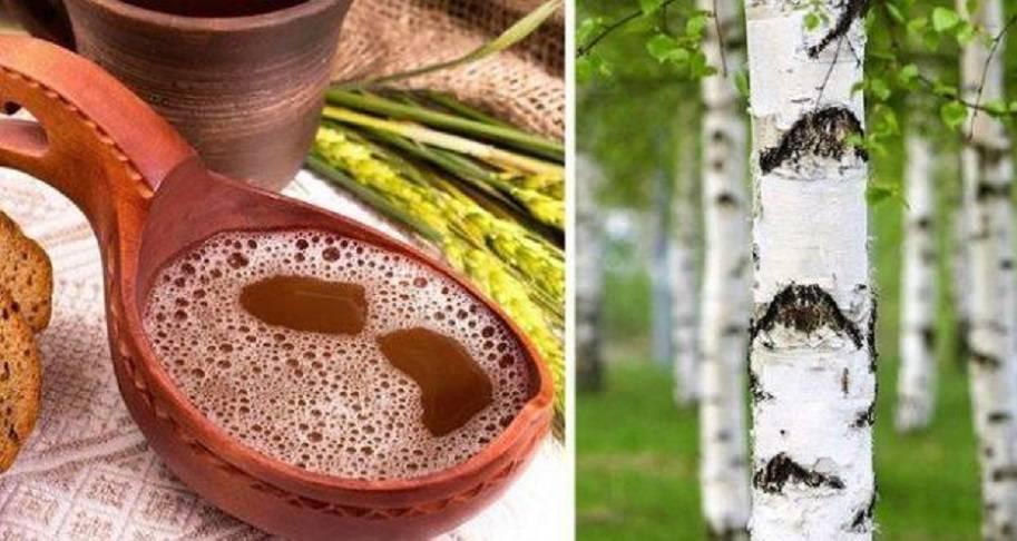 Как сделать квас из березового сока по пошаговому рецепту с фото