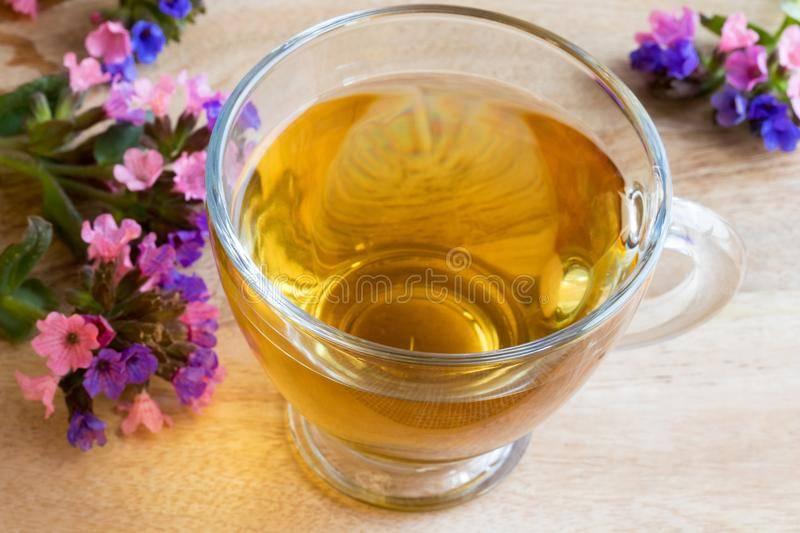 Лечебная медуница: полезные свойства и противопоказания, применение в кулинарии, медицине и косметологии