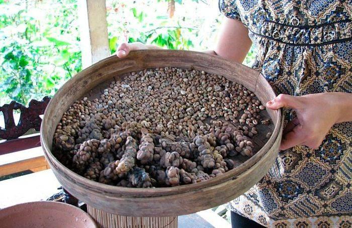 Самый дорогой в мире кофе из кала животных