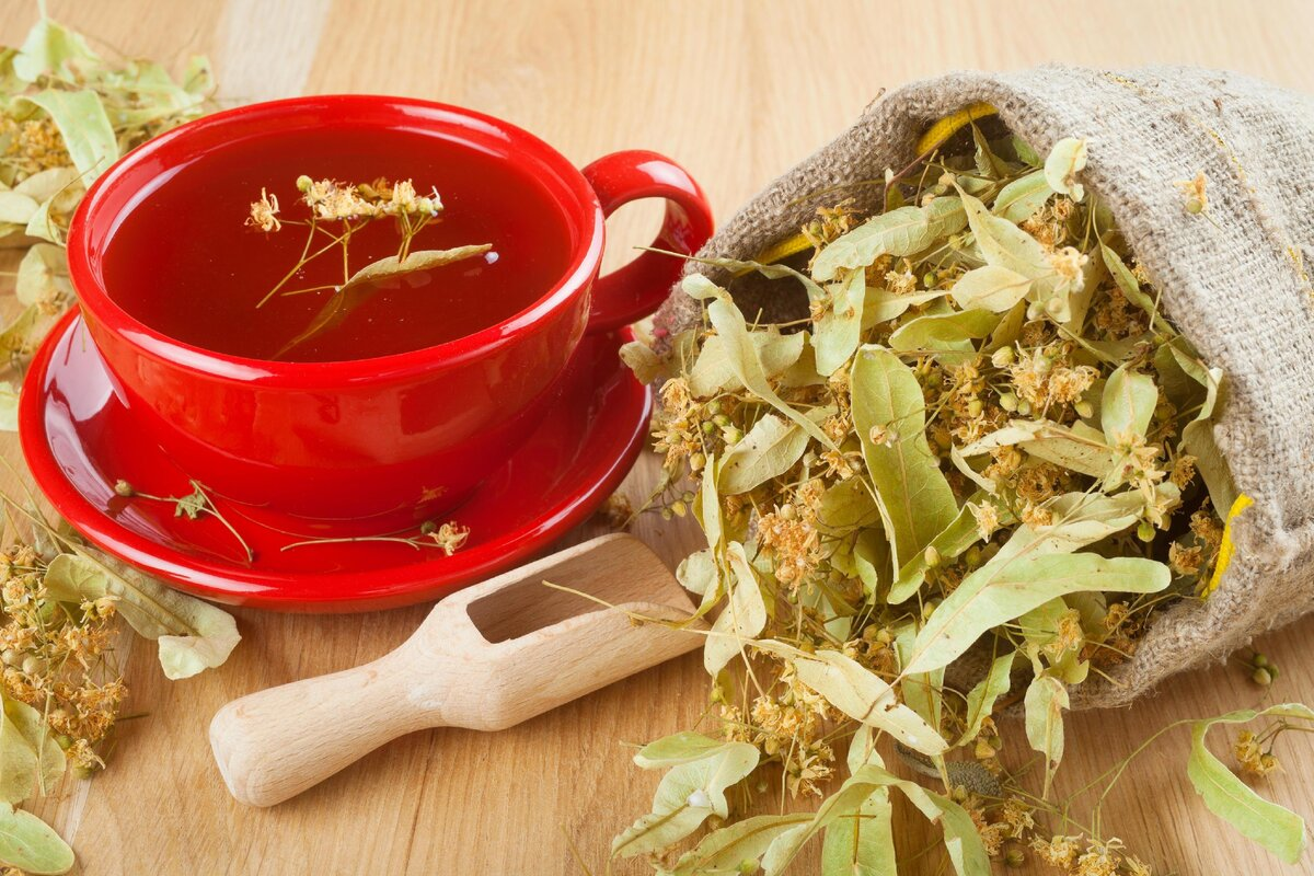 Чай из крапивы вред и польза