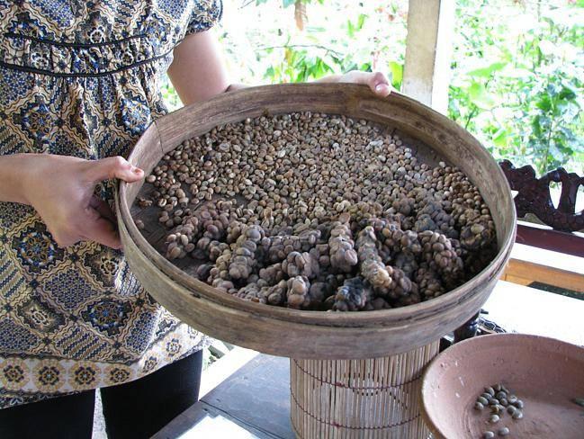 Кофе из кала животных: все о самом дорогом кофе в мире из помета