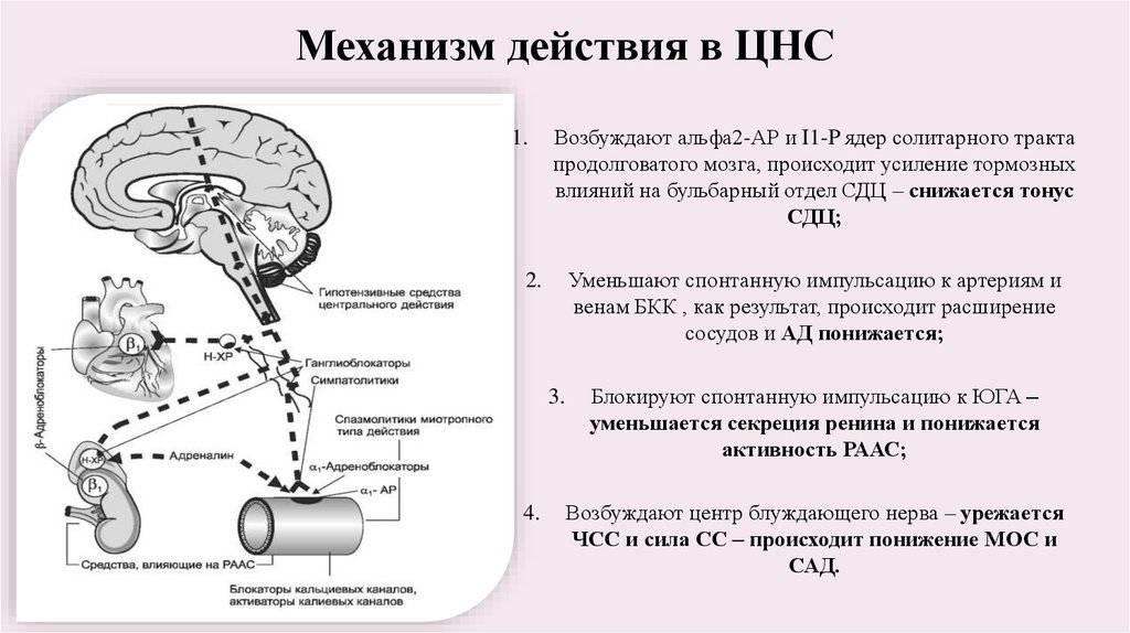 Влияние курения на нервную систему и ее восстановление после отказа от сигарет
