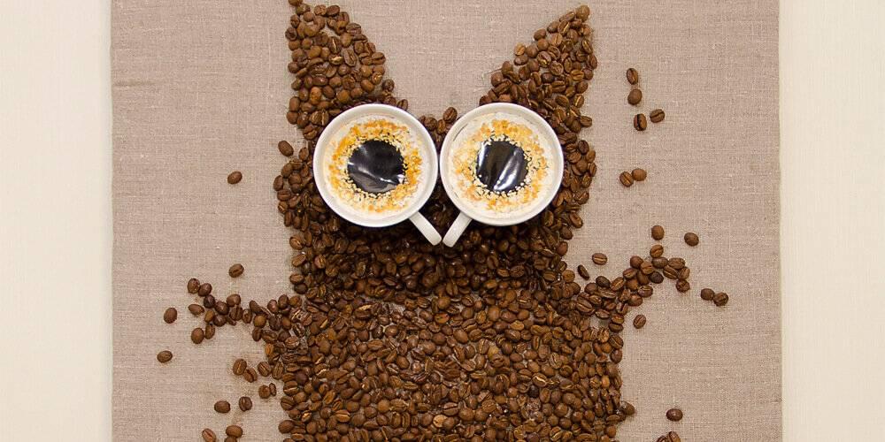 Зависимость от кофеина: как перестать пить кофе и чем его заменить