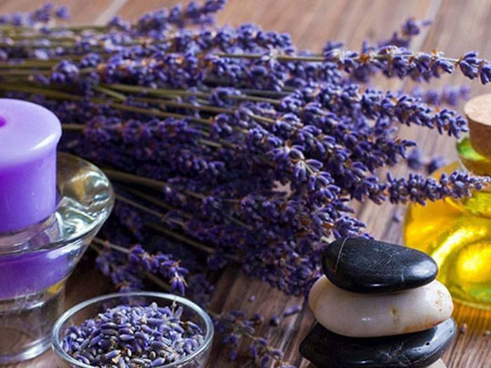 Чай с лавандой: полезные свойства (рецепт)