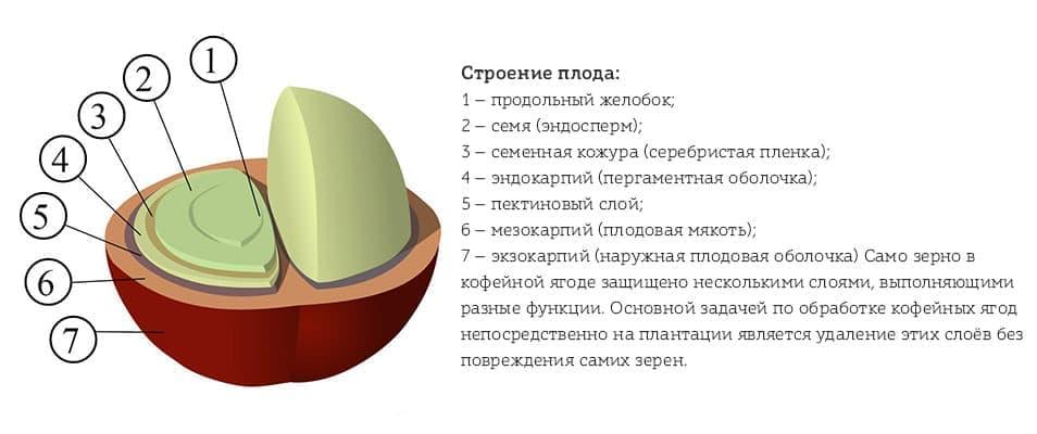 Состав кофе: белки, углеводы, жиры, кислоты, витамины…