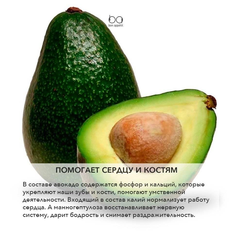 Авокадо: польза, вред и противопоказания