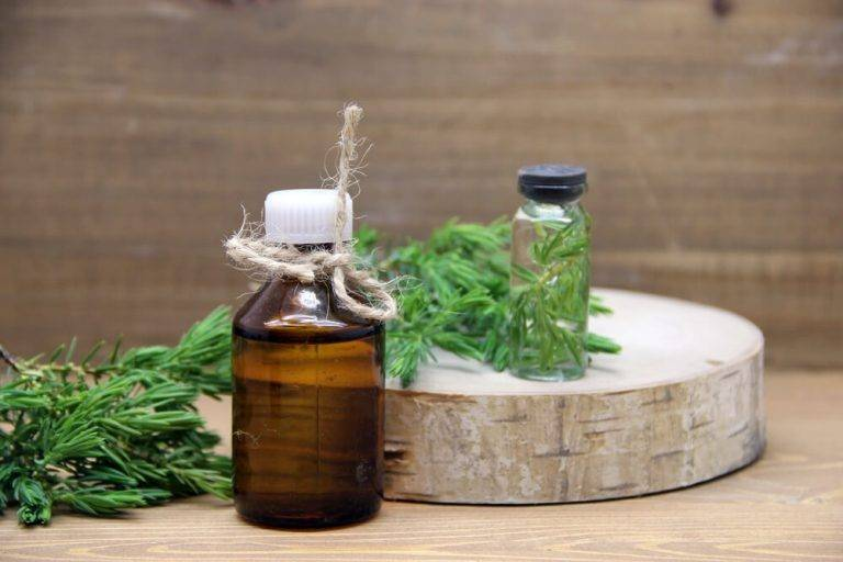 Чай из можжевельника: полезные свойства и вред, рецепты