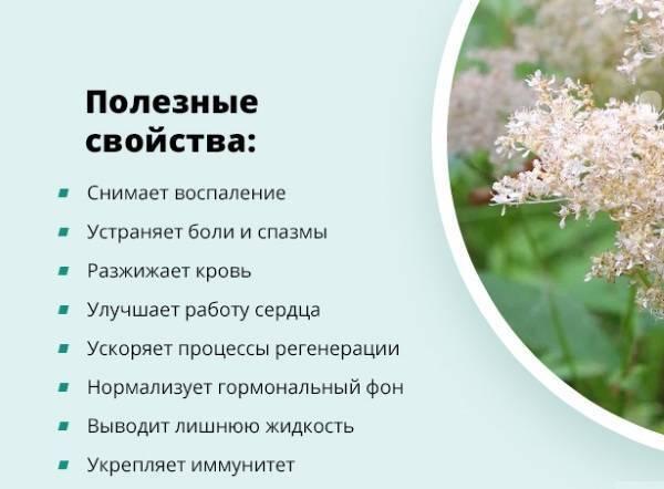 Настойка из цветков сирени лечебные свойства