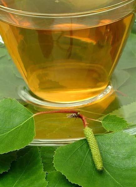 Листья березы — лечебные свойства и противопоказания, от чего помогают