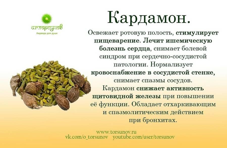 Рецепты и свойства чая с кардамоном