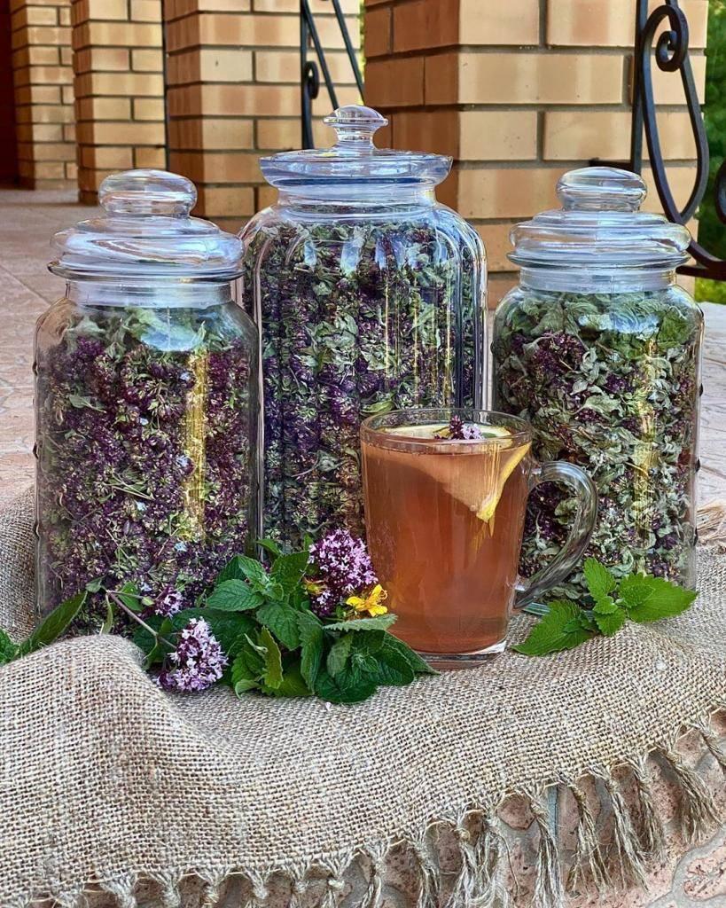 Какие травы собирать в августе для чая. какие травы в августе собирать