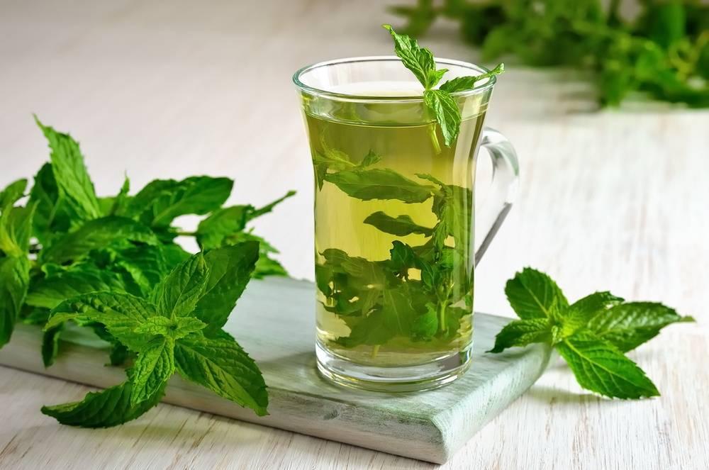 Чай с базиликом: 5 лучших рецепта для здоровья