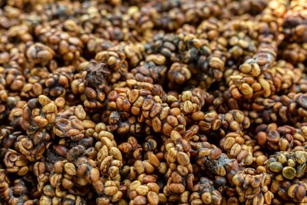 Кофе лювак: особенности вьетнамского напитка