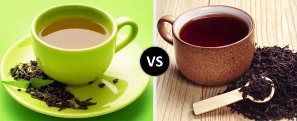 Чем зеленый чай отличается от черного - научные факты