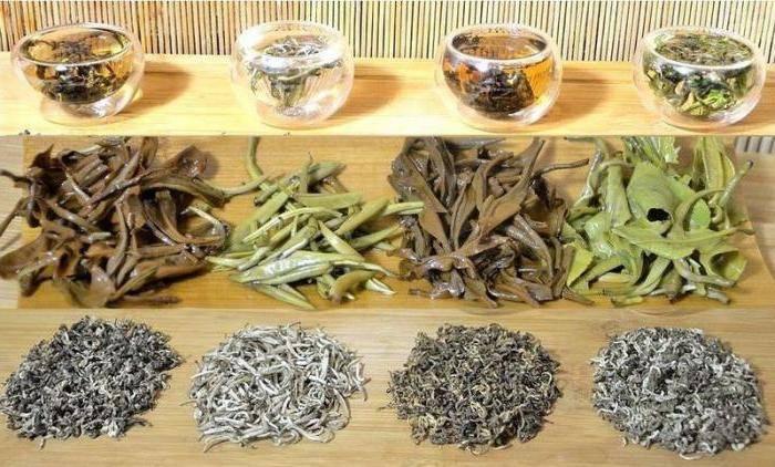 Чай с лотосом из вьетнама свойства и противопоказания