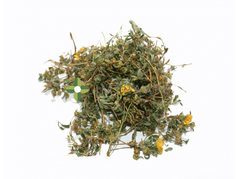 Курильский чай посадка и уход в открытом грунте, фото сортов, размножение, выращивание и сочетание в ландшафтном дизайне