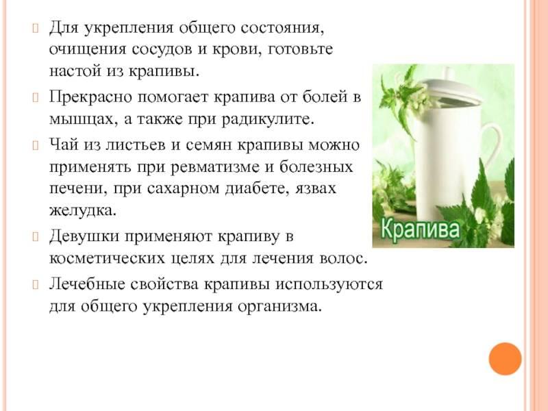 9 интересных рецептов чая из крапивы для поддержания здоровья