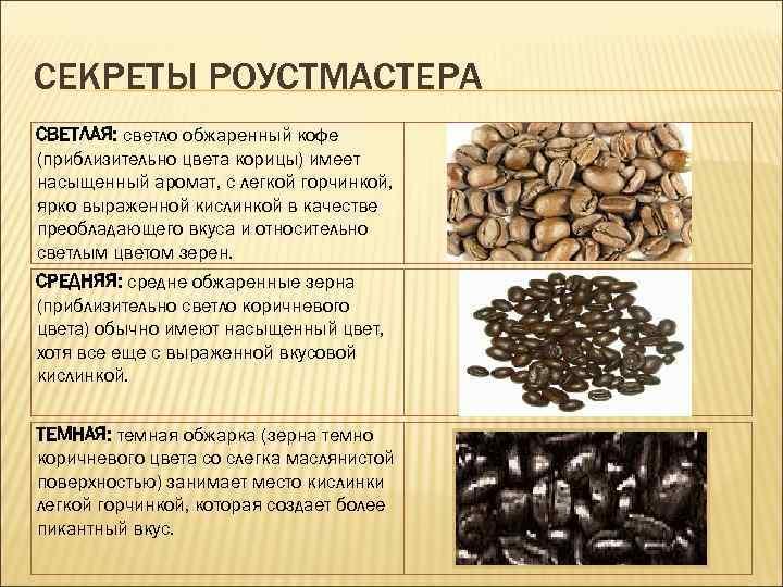 Кофе марагоджип: описание и особенности сорта арабики