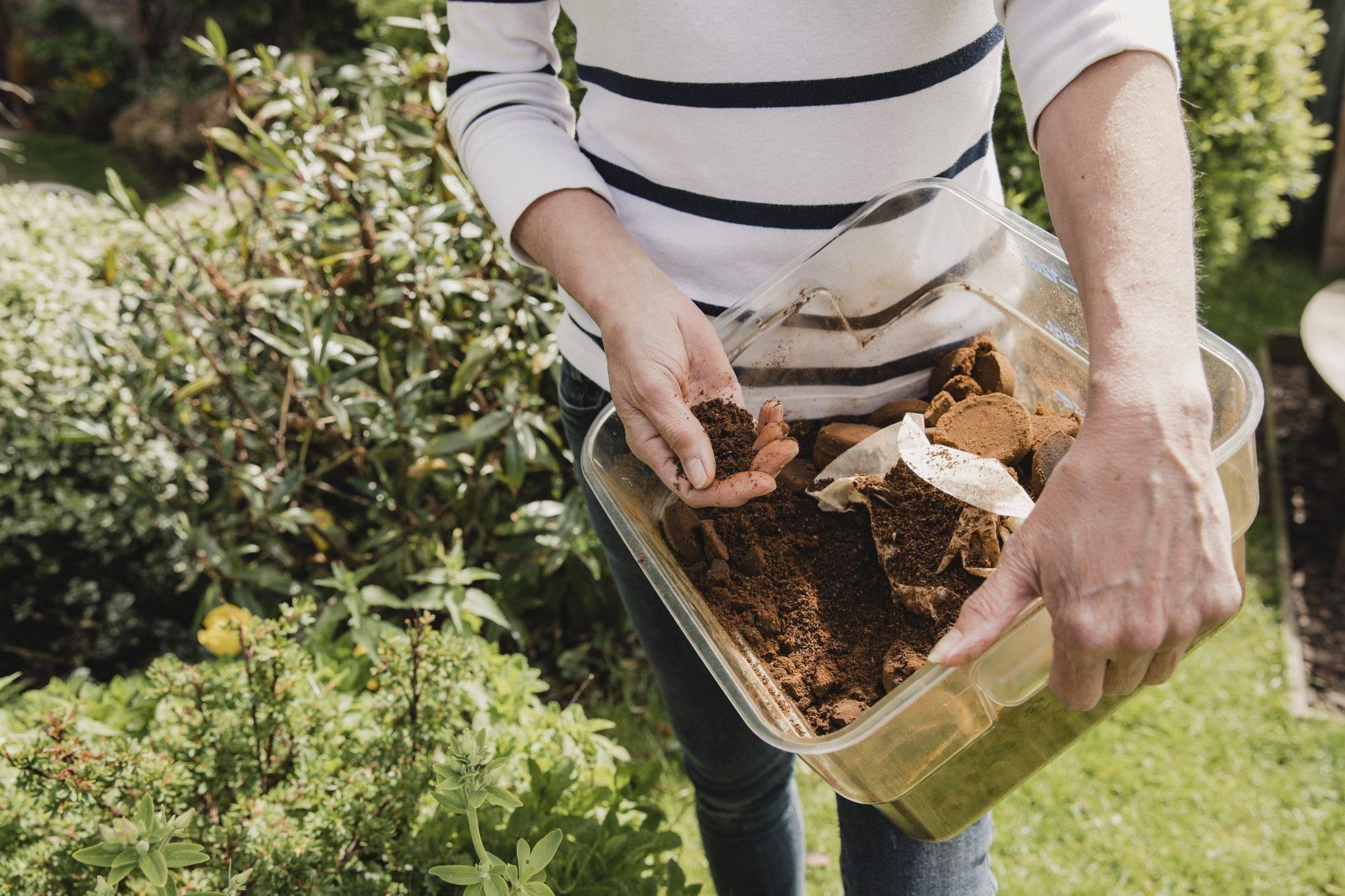 Кофейная гуща как удобрение для огорода: верно применяем