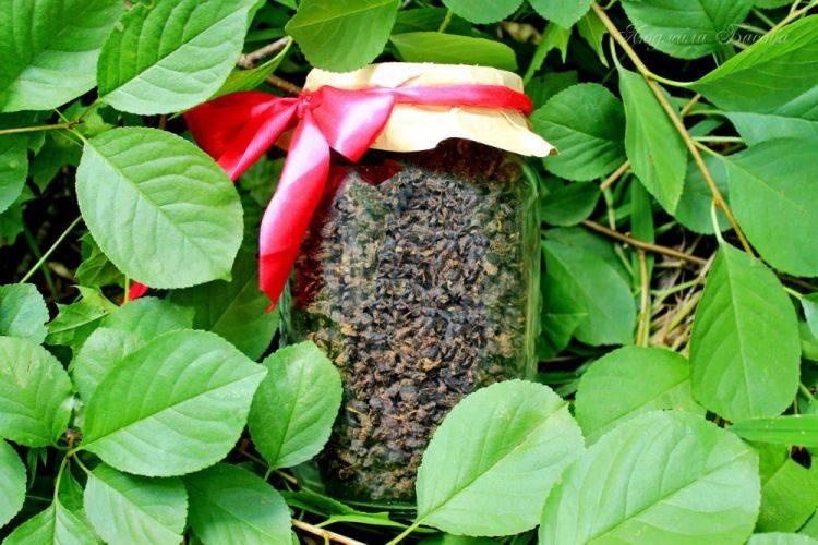 Чай из листьев вишни. польза и вред. | cofete.ru