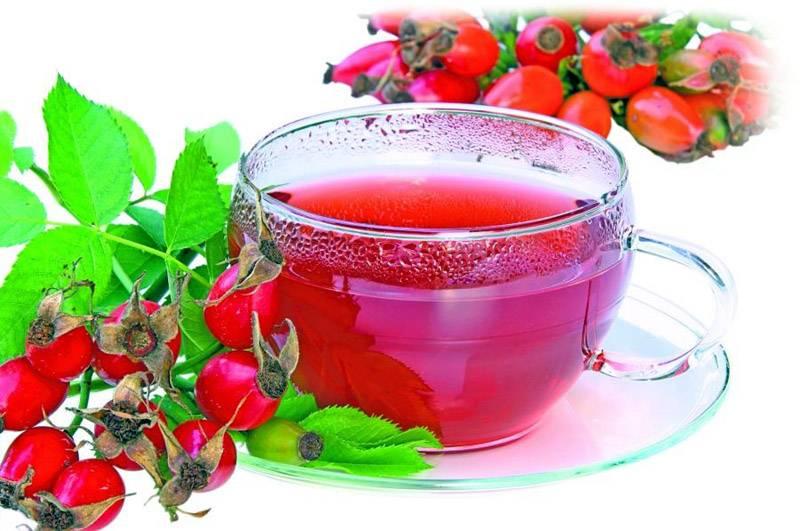 Ягода калина польза и вред. калина - одна из самых полезных ягод в природе? | школа красоты