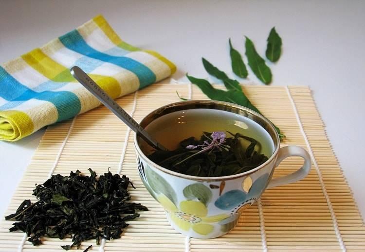 Чай из кипрея - польза и вред, как заваривать и пить кипрейный чай?