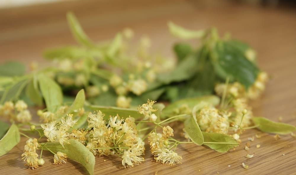 Полезные свойства липового чая и противопоказания