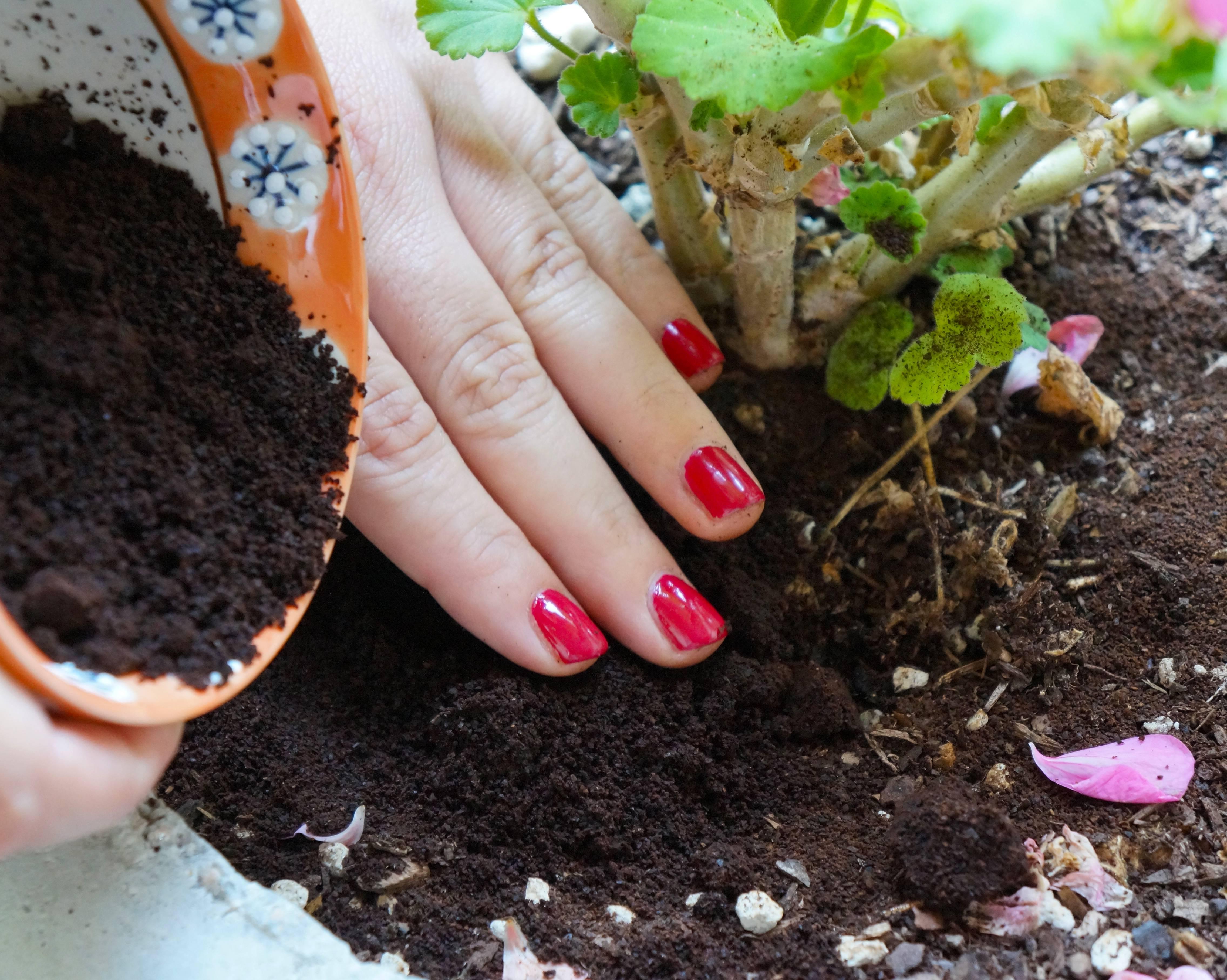 Кофейная гуща (спитой кофе) как удобрение и мульча для томатов, как приготовить компост из жмых