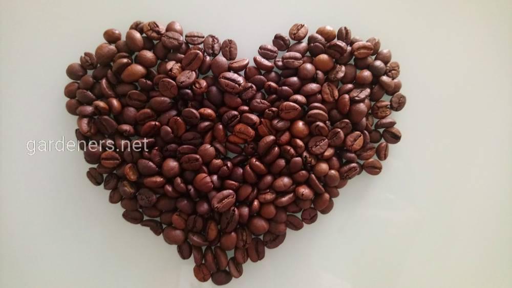 Органический кофе: понятие, виды, преимущества, как выбирать