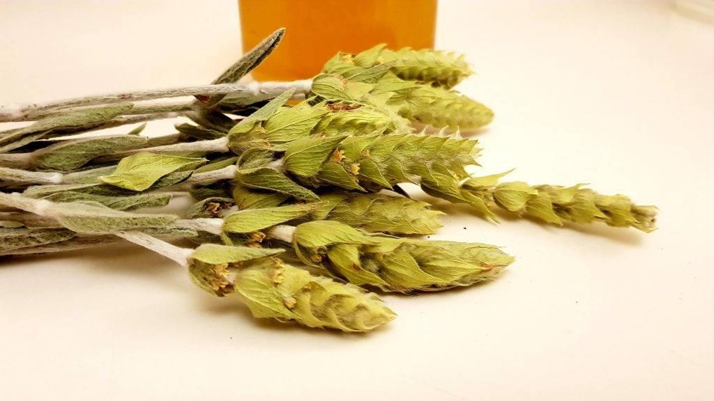 Мурсальский (пиринский) чай - знаменитый болгарский травяной напиток