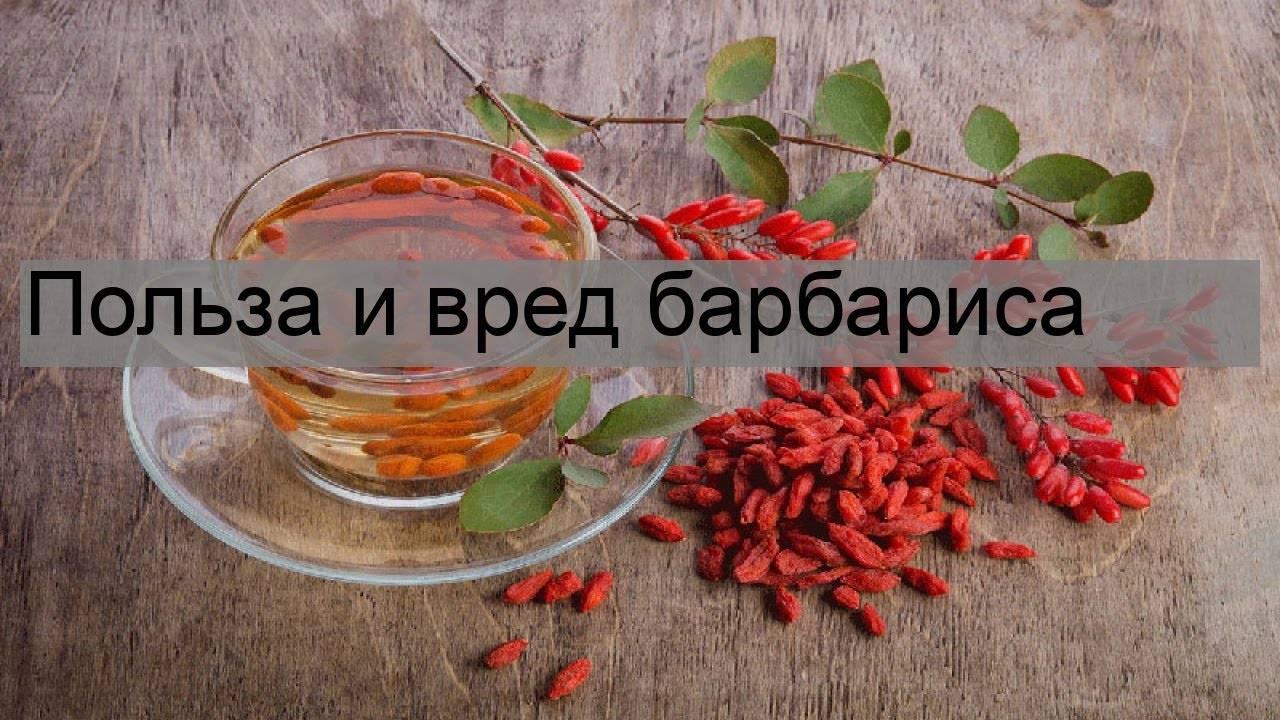 Барбарис чай польза и вред