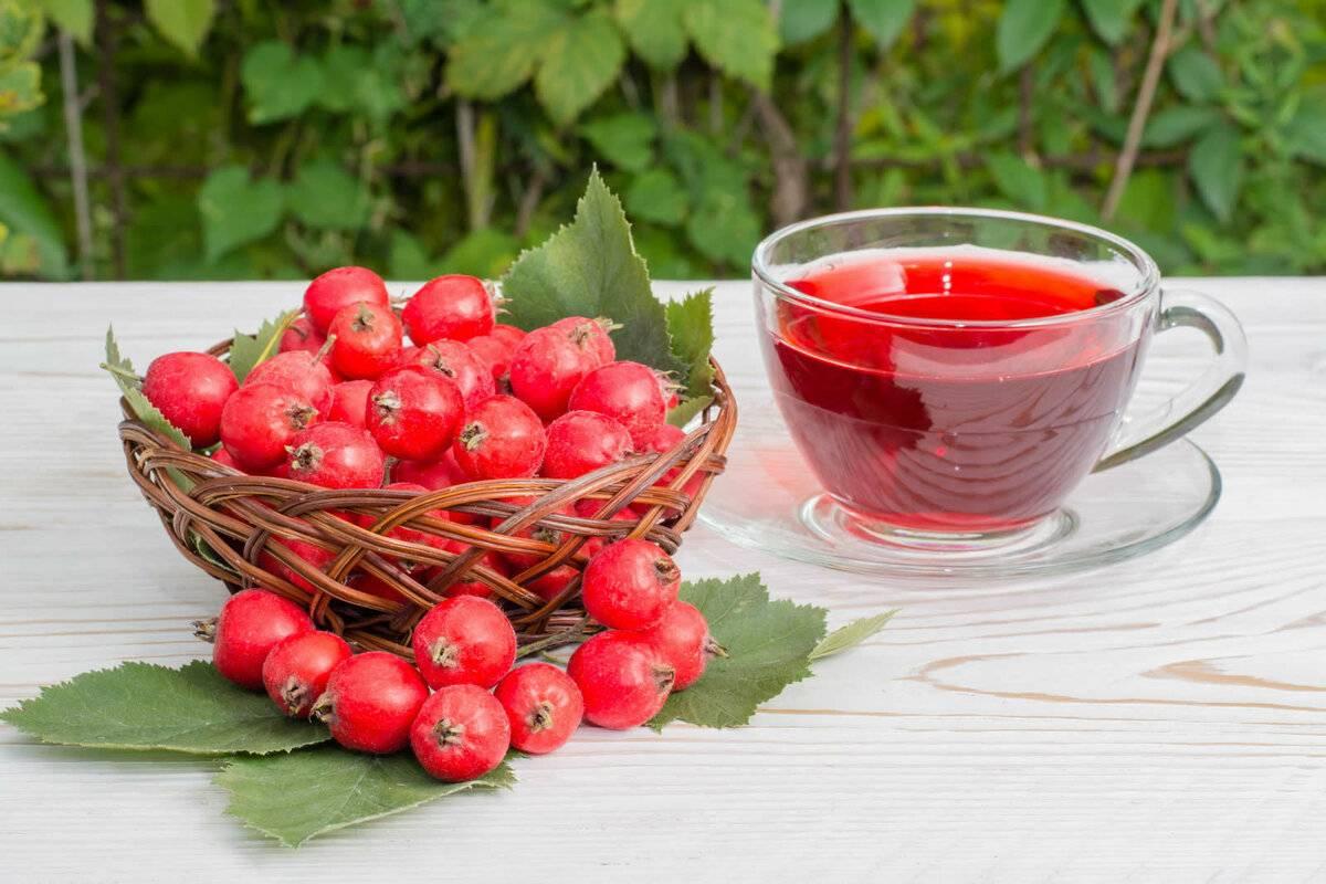 Вишня и черешня – польза и вред для здоровья организма
