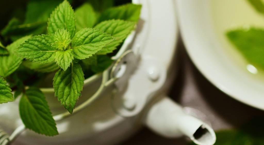 Мята в чае польза и вред