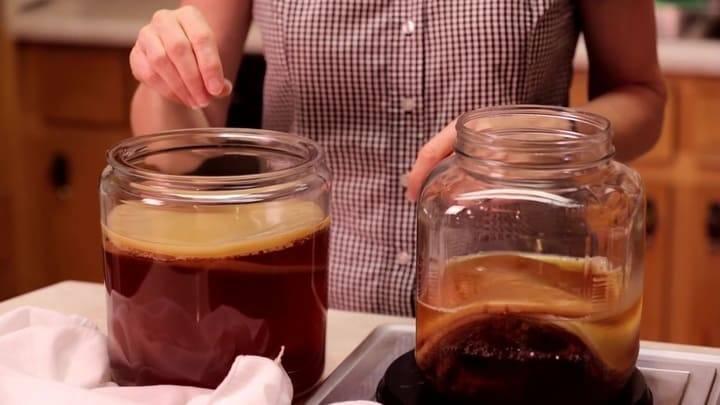 Комбуча (чайный гриб) – придуманная эффективность или польза для организма?