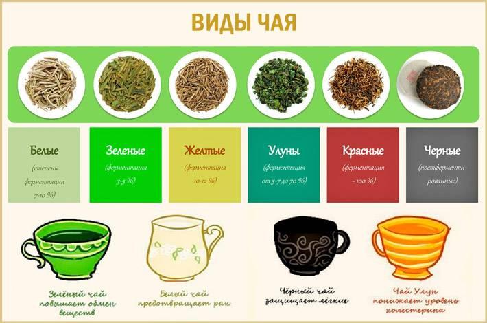 Как правильно заваривать чай и как его выбрать. читайте на 24health.by