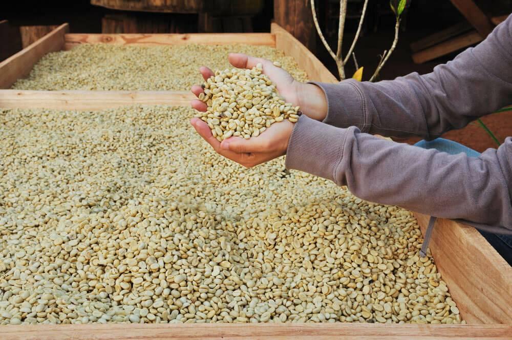Способы обработки кофе | specialty coffee