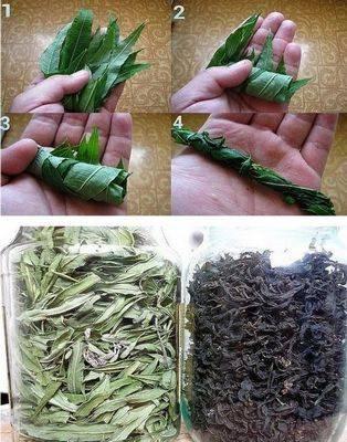 Как собирать и сушить иван-чай (кипрей, копорский чай) - ферментировать в домашних условиях, когда, изготовление