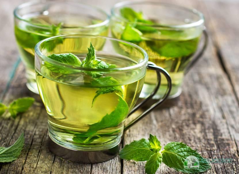 Чай из крапивы - польза и вред для здоровья