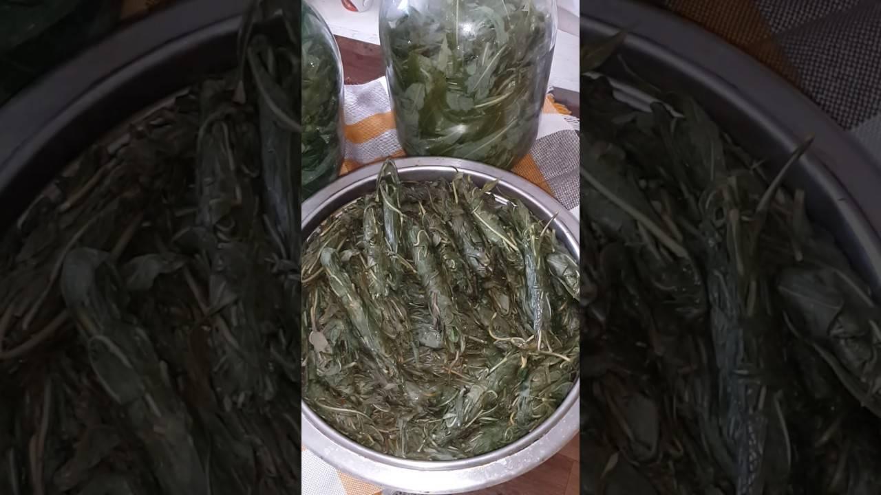Как заготавливать иван-чай | делай сам 16