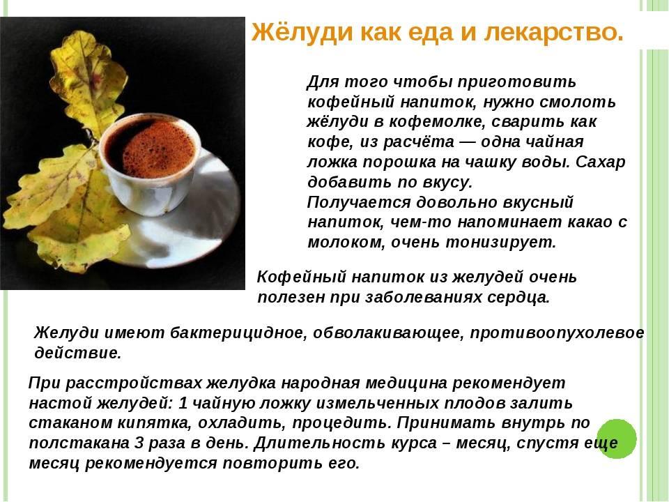 Кофе из жёлудей: сбор и заготовка, рецепт приготовления, польза