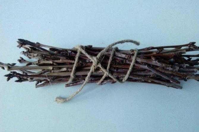 Отвар из веток и листьев вишни - целебные травы