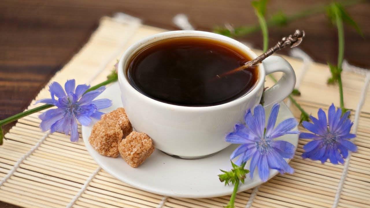 Что полезнее для здоровья кофе или цикорий | польза и вред