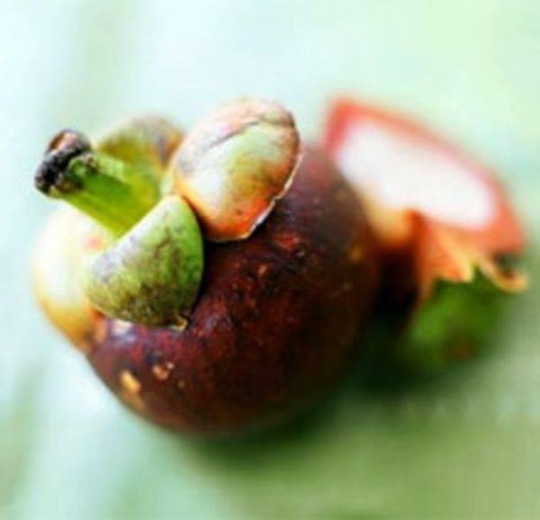 Что такое мангустин. фрукт мангустин – полезные свойства и противопоказания, как едят