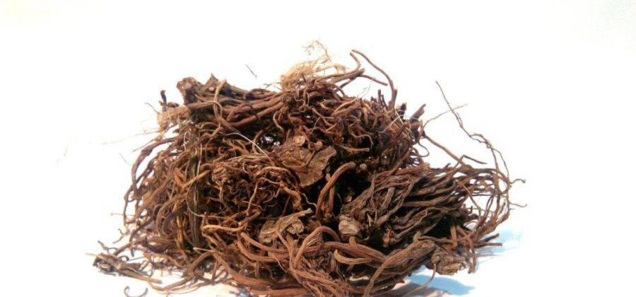 Когда собирают одуванчики для лечения: заготовка корней, листьев, цветов
