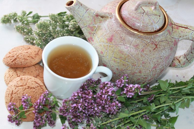 Трава душица: ее лечебные свойства и противопоказания, фото, советы по применению