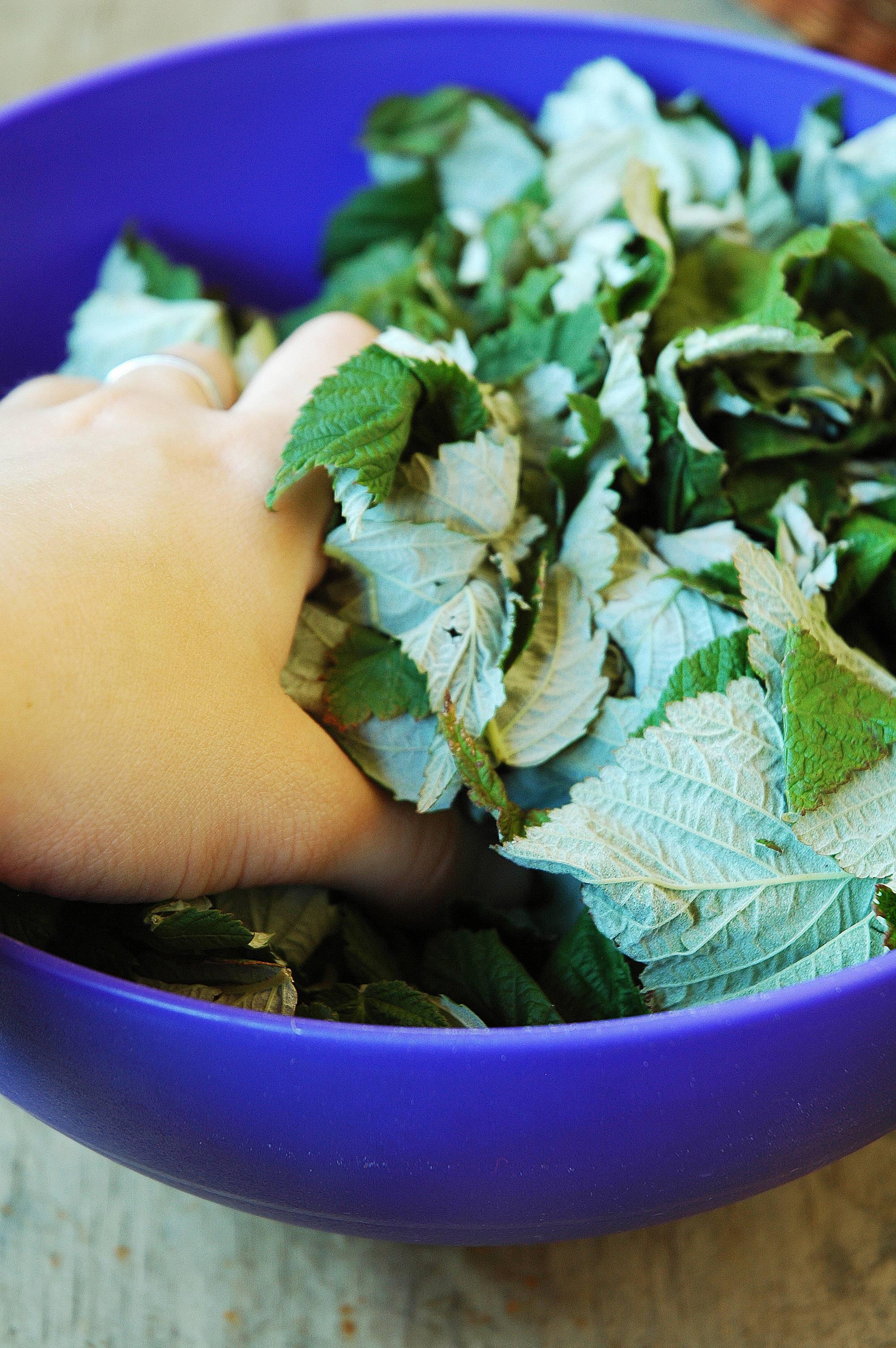 Чай из листьев малины - рецепты вкусного чая, как приготовить, польза и вред напитка