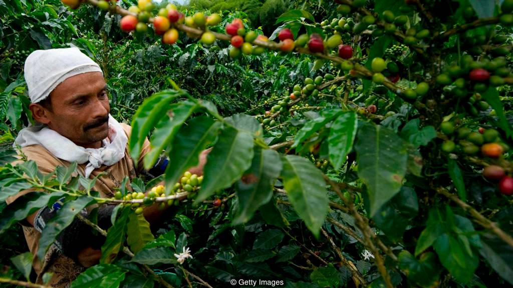Каким бывает кофе: всевозможные классификации и виды кофейных напитков