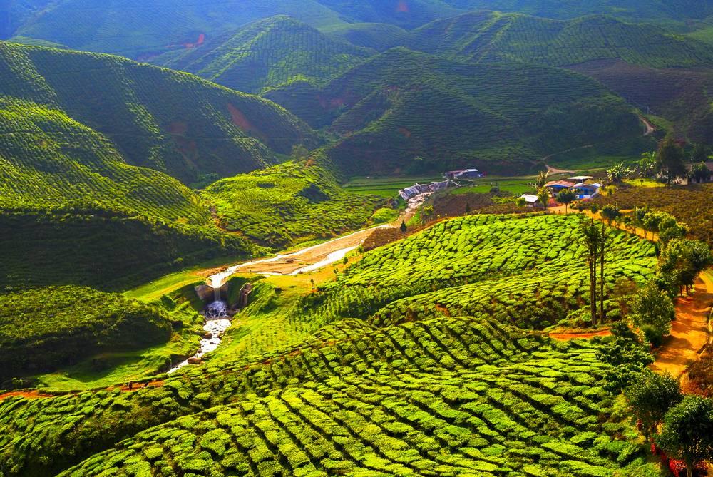 «вчерашний чай – змеиный яд». эксперт – о самом популярном напитке   общество: события   общество   аиф тюмень